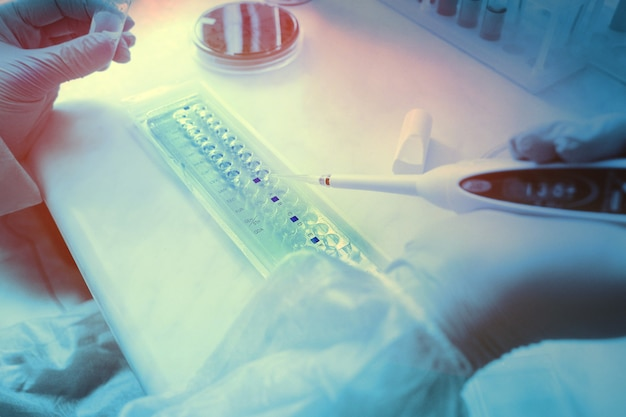 Cientista ou assistente de laboratório com uma pipeta ou dispensador nas mãos de um laboratório bacteriológico de um laboratório bacteriológico