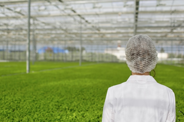 Cientista pesquisando plantas e doenças em estufa