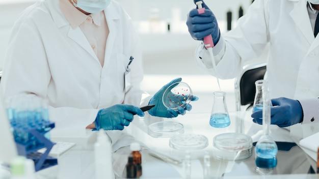 Cientistas da microbiologia examinando bactérias em uma placa de petri.