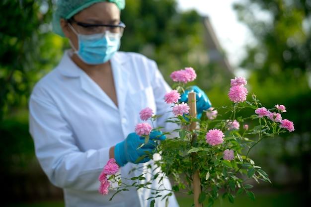 Cientistas médicos verificando saúde rosa árvore rosa pesquisa para produtos de perfume