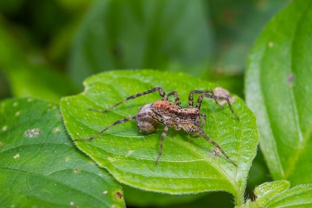 Cima, aranha, em, floresta