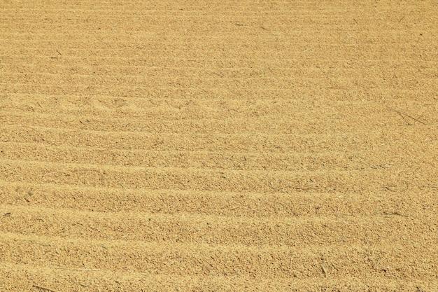 Cima, arroz paddy, fundo