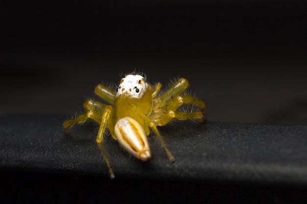 Cima, de, amarela, aranha saltando, ou, telamonia aranha, ligado, carro preto, telhado