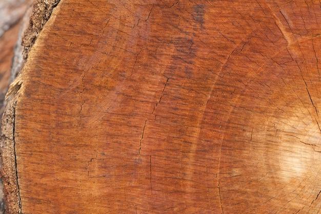 Cima, de, antigas, madeira, corte, textura