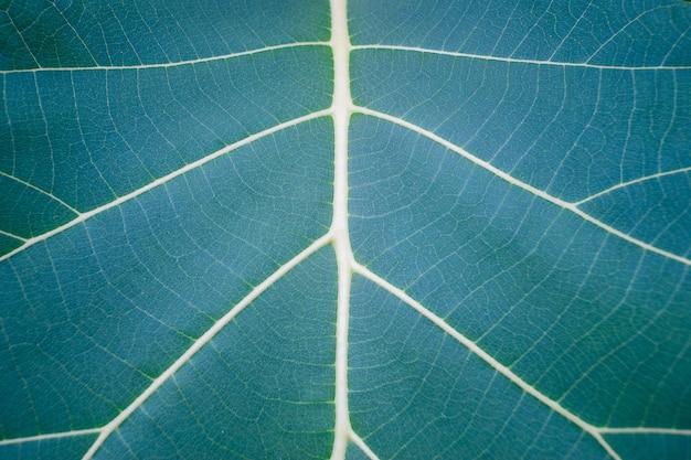Cima, de, folha verde