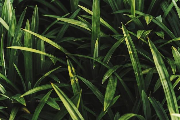 Cima, de, fresco, grama verde