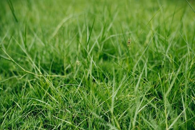 Cima, de, grama verde