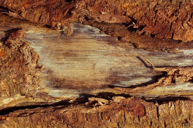 Cima, de, grão madeira