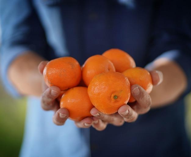 Cima, de, local, farmer's, mãos, segurando, orgânica, laranjas, e, clementines