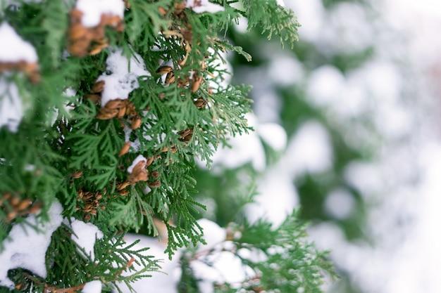 Cima, de, neve, ligado, árvore