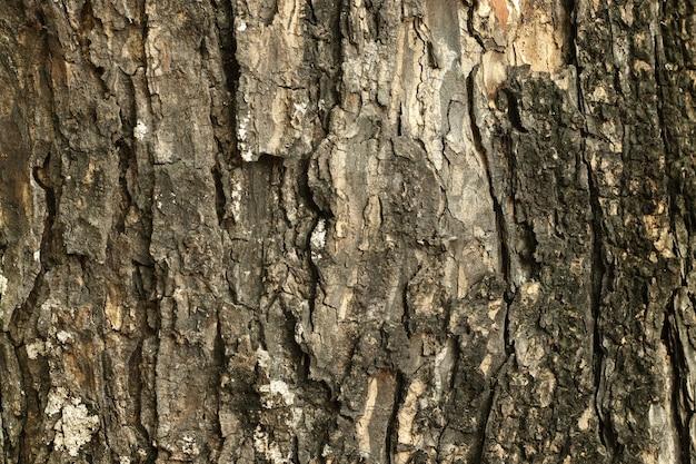 Cima, de, tronco árvore, em, a, floresta