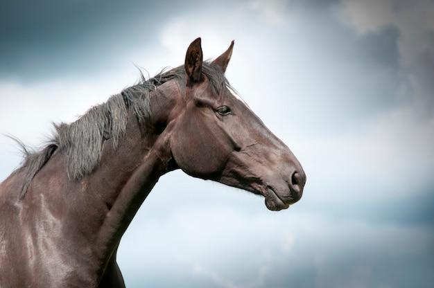 Cima, de, um, cavalo