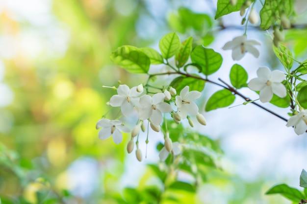 Cima, grupo, de, flor branca, florescer