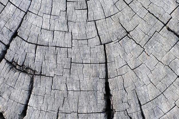 Cima, madeira, stump redondo, corte, árvore, com, anual, anéis, como, um, madeira, textura