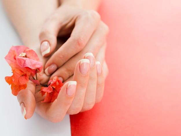 Cima, mulher, mãos, segurando, flores