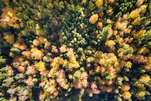 Cima para baixo vista aérea da floresta de outono verde e amarela com muitas árvores frescas.