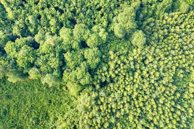 Cima para baixo vista aérea da floresta verde verão com muitas árvores frescas.