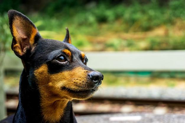 Cima, quadro, de, cão enfrenta, ligado, lado