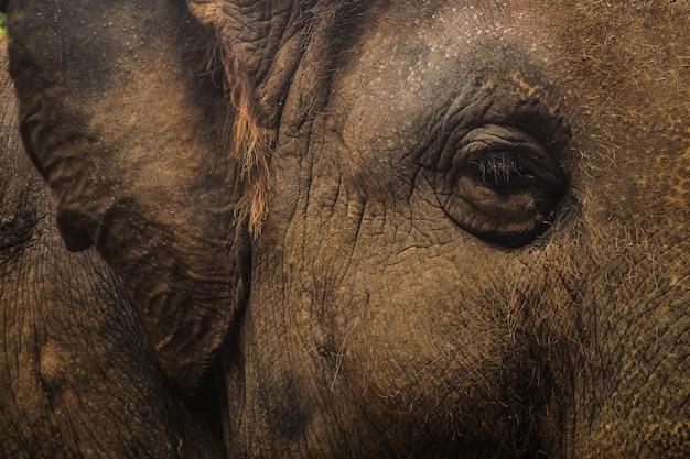 Cima, retrato, de, elefante, ásia