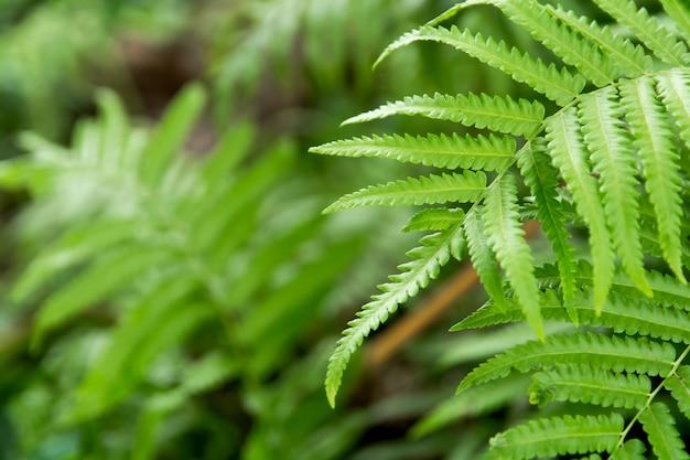Cima, samambaias, folhas, fundo verde