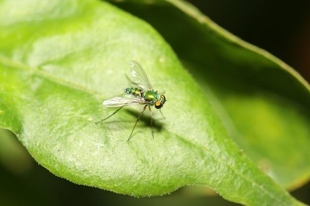 Cima, verde, mosca fruta, ligado, folha verde