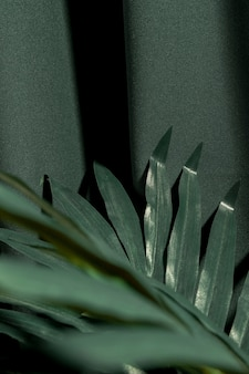 Cima, verde, tropicais, planta