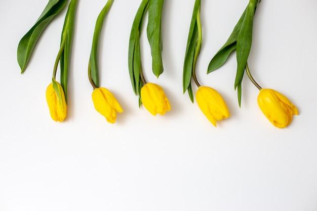 Cinco botões de tulipas amarelas repousam sobre um fundo branco na parte superior da moldura de maneira uniforme e ritmada