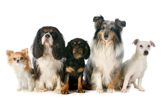 Cinco cachorros