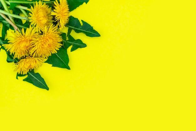 Cinco dentes-de-leão amarelos com folhas ficam lindamente no canto esquerdo em uma superfície amarela. primavera ou verão fundo