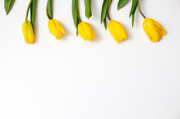 Cinco flores de tulipas amarelas repousam sobre um fundo branco na parte superior da moldura