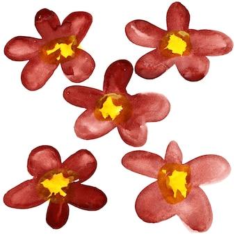 Cinco flores em aquarela vermelho-escuras isoladas sobre o fundo branco