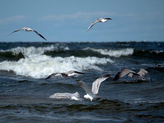Cinco gaivotas voam sobre as ondas do mar caçando peixes em um dia ensolarado