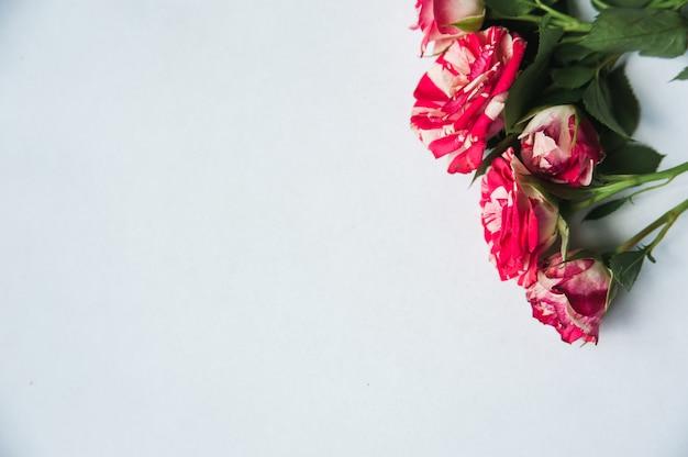 Cinco pequenas rosas na luz para criar cartões