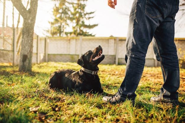 Cinologista macho com cão-guia, treinando ao ar livre