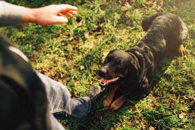 Cinologista masculino com cão de trabalho, treinando do lado de fora. proprietário com seu obediente animal de estimação ao ar livre, cão de caça doméstico
