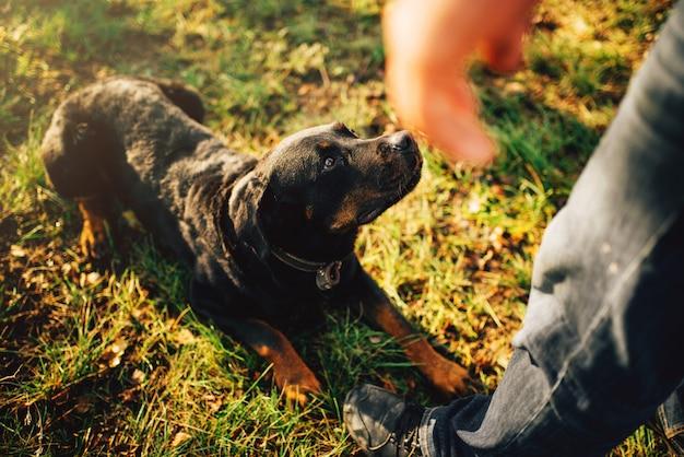 Cinologista masculino com cão trabalhador, treinando ao ar livre