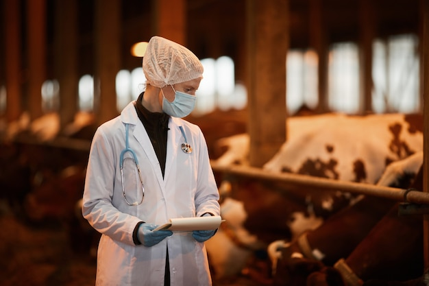 Cintura para cima retrato de uma jovem veterinária inspecionando vacas em uma fazenda de gado leiteiro, usando máscara e jaleco, copie o espaço