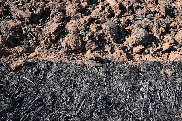 Cinza de palha e caroço de terra em campo de arroz antes de arroz de planta