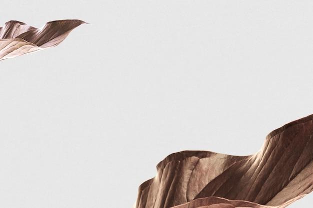 Cinza leag seco com espaço de design