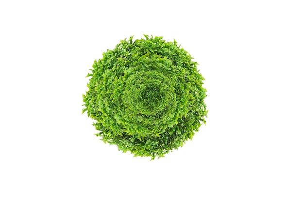 Círculo de folhas verdes isolado no branco com traçados de recorte