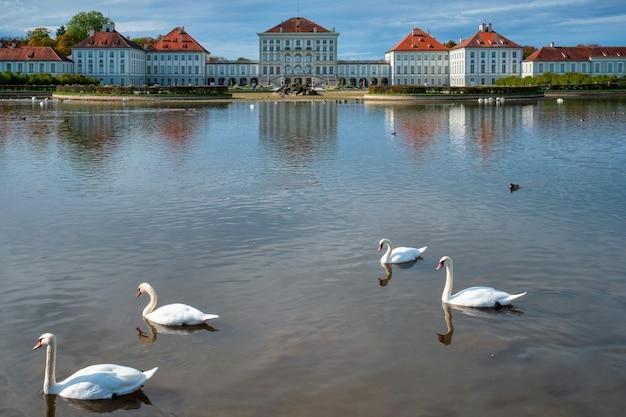 Cisne em lagoa perto do palácio de nymphenburg, munich bavaria, alemanha