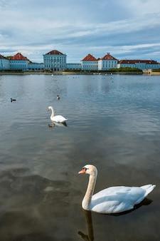 Cisne em lagoa perto do palácio nymphenburg em munich bavaria alemanha