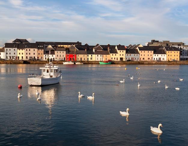 Cisnes no mar com navios e casas nas costas