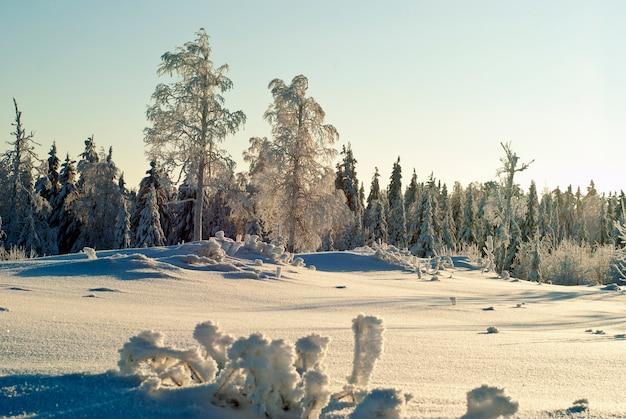 Clareira coberta de neve em uma floresta de coníferas com árvores congeladas