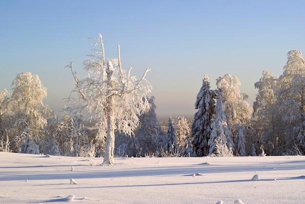 Clareira coberta de neve no topo da colina, cercada por árvores cobertas de geada em um clima frio e claro