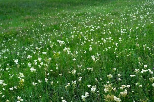 Clareira de flores desabrochando e grama verde
