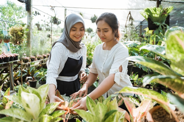 Cliente de aconselhamento de mulher jardineiro