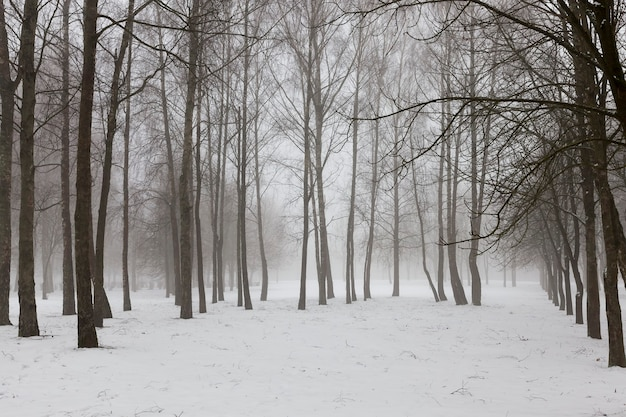 Clima de inverno no parque ou floresta e árvores decíduas, inverno gelado após a queda de neve com árvores decíduas nuas, árvores decíduas no inverno
