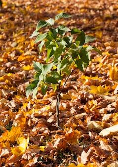 Clima de outono na floresta