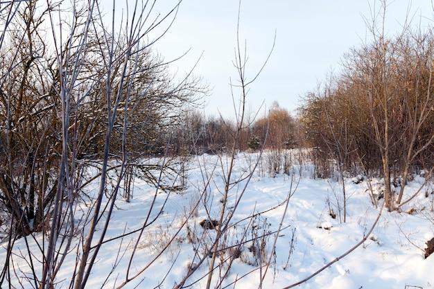 Clima frio do inverno após a queda de neve, montes de neve no inverno, montes de neve profunda após a última queda de neve